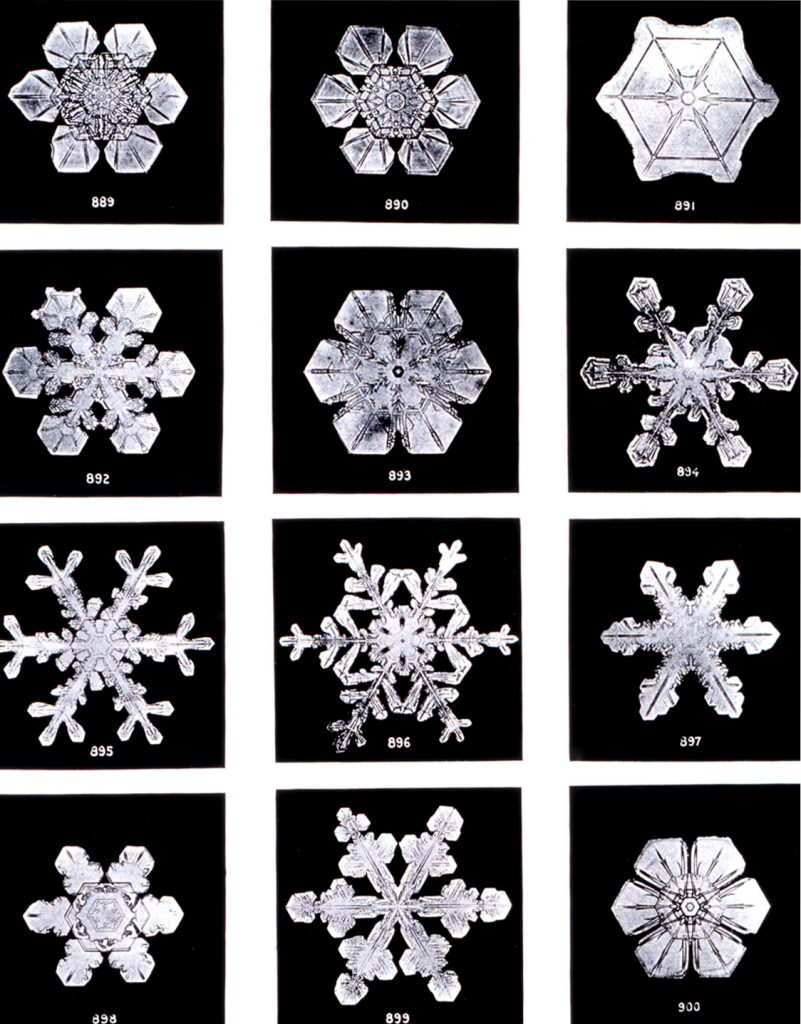 "By Wilson Bentley - Plate XIX of ""Studies among the Snow Crystals ... "" by Wilson Bentley, ""The Snowflake Man."" From Annual Summary of the ""Monthly Weather Review"" for 1902., Public Domain, Link"